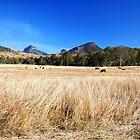 Winter in Queensland by onemistymoo