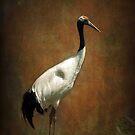 Bringer of luck - Japanese Crane by steppeland