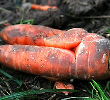 Unearthed Carrot  by AnnDixon