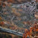Frozen Spider Web Melting by relayer51