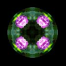 Pink Hydrangea Kaleido by Matthew Sims