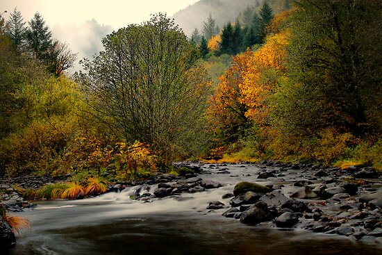 Simple Beauty ~ Calapooya River ~ by Charles & Patricia   Harkins ~ Picture Oregon