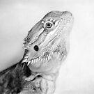 Draco by Martin Lynch-Smith