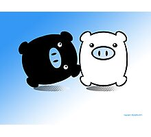 TWIN PIGS  Photographic Print