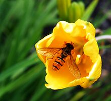 Hover Fly in Buttercup by ZestyDesigns