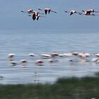 Flamingo Flight by Leanne Jones