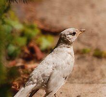 Spirit Bird by Owed to Nature