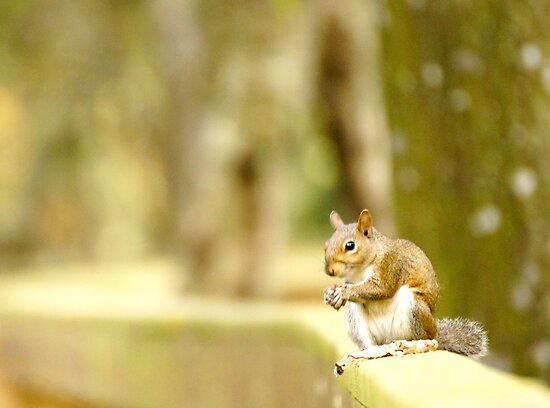 Squirrell. by loluog