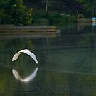 Egret in flight over lake by Lori Coleman