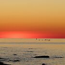 Birds flying at Sunset by jrier