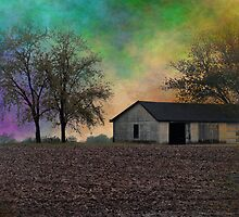 Not in Kansas Anymore... by Brian Gaynor