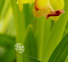 Bubble and orchid flower by scrawny1