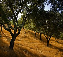 The Cork Trees of Alportel by Steve Woods