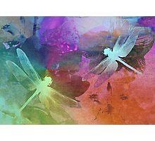 Amazing Dragonflies. Photographic Print