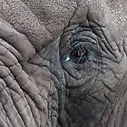 Elephant's Eye by Matthew Walters