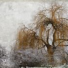 Winter Willow by mzjohansen