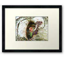 Umm!! Should I Be Collecting Nuts? - Love Bird - NZ Framed Print