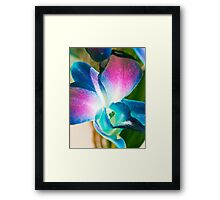 Mystical Orchid.  Framed Print