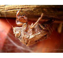 Cicada Skin Photographic Print