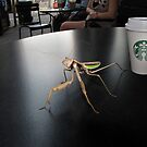 Hay! I'm Trying To Have a Coffee Here! by Phil Campus