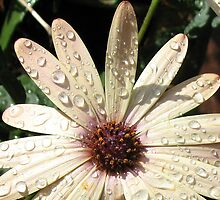 Sparkling Raindrops by BlueMoonRose