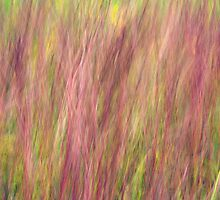 Kitty Todd Nature Preserve Prairie Grass Impressionism by Mitch Labuda