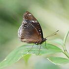 Butterfly by JudeStarr