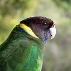 Parrot at Yallingup by SoulSparrow