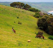 Kangaroos with Joeys grazing by Simon Bannatyne