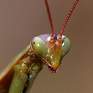Yikes!!! - Praying Mantis by Jim Cumming