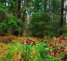 Autumn Forest by SunDwn