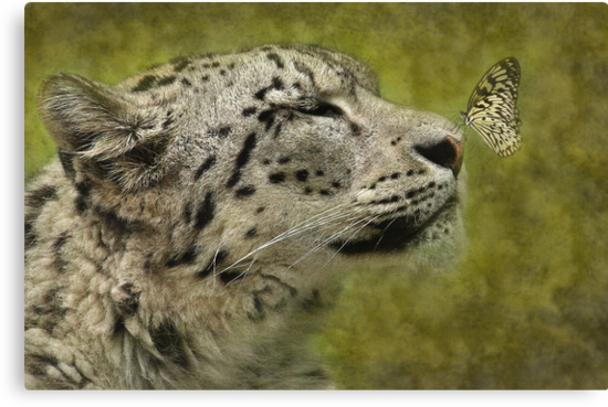 The Leopard and the Butterfly. by Mark Hughes