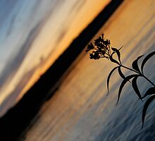 Lonesome Flower - Lunenburg, Nova Scotia by Caites