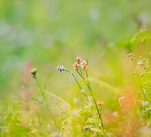 Scottish Wild Forget me nots and Redshank by Rosie Nixon