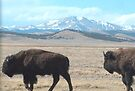 Buffalo Peaks buffalo Park Co Colorado by Christine Ford