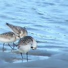 Sandpipers... by LindaR