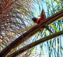 Garden Birds, Rainbow Lorikeet by Jaxybelle