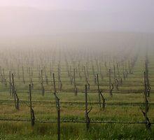 Morning Vineyard  by BalancedArt