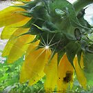 Antiqued Sunflower by Debbie Robbins