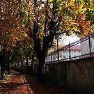 Autumn Colors by Timothy L. Gernert