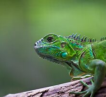 Its easy being Green ! by Dean Cunningham