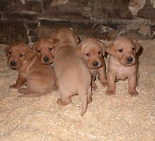 litter of healthy pups by michaelwallwork