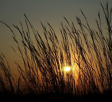 Thorny Croft's Perfect Sunset... Free State, South Africa by Qnita
