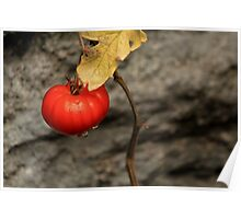 Like A Tomato In The Rain ... Poster