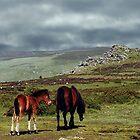 Wild Ponies, Dartmoor, Devon, England....! by Roy  Massicks
