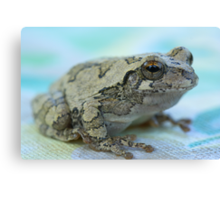 Gray tree frog Canvas Print