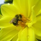 furry bee by Heather Rowe of Oil Water Artt
