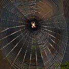 Spider In The Spotlight by heatherfriedman
