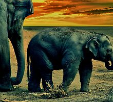 Elephant Sunset by Steven  Agius