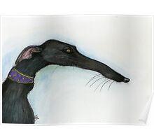 A Little Crooked Nose - Greyhound Art Poster